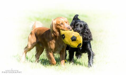 Sumo & Cash with yellow football.jpg
