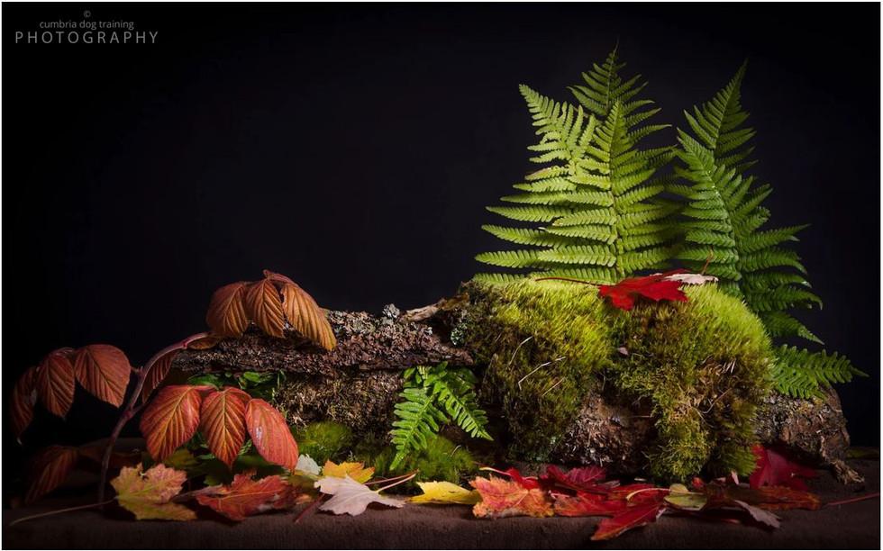 LIFE_autumn.JPG