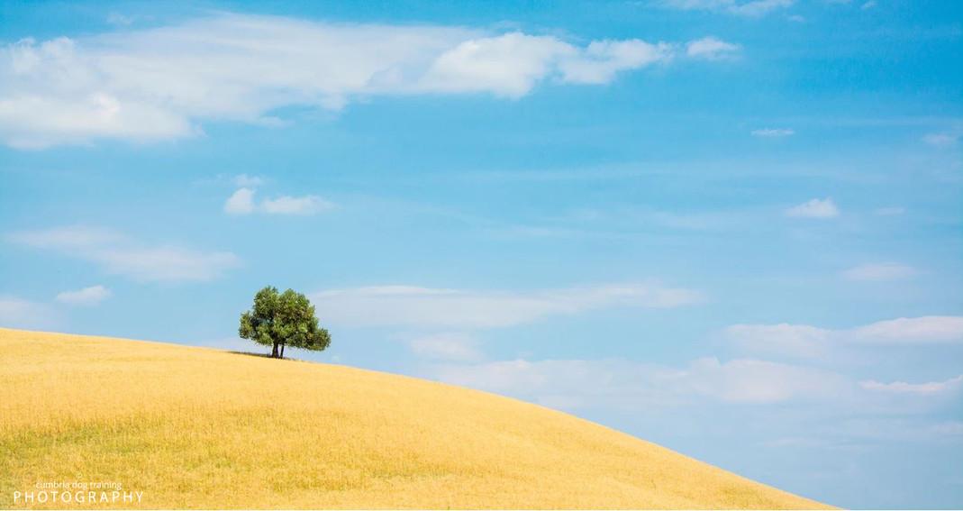 LIFE_Tuscany.JPG