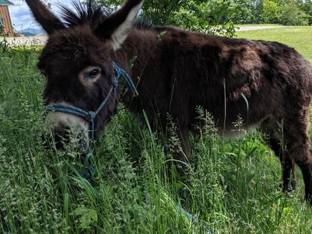 Donkey - At Work