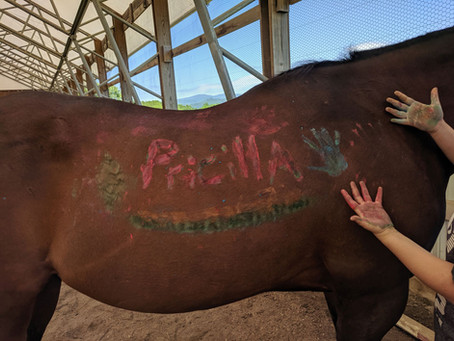 Adorning the Horses