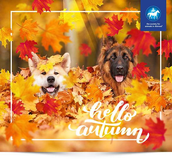 SAID-Autumn.jpg