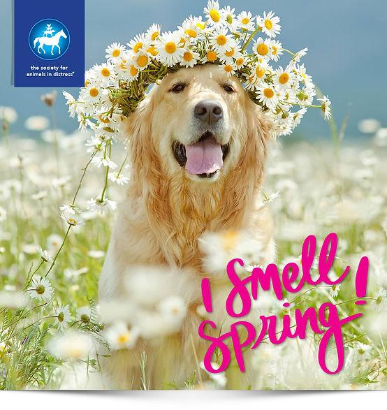 SAID-Spring.jpg