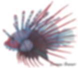 feuerfisch.jpg