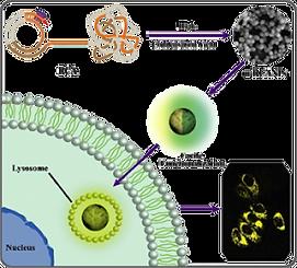 acs Appl Bio mater.png
