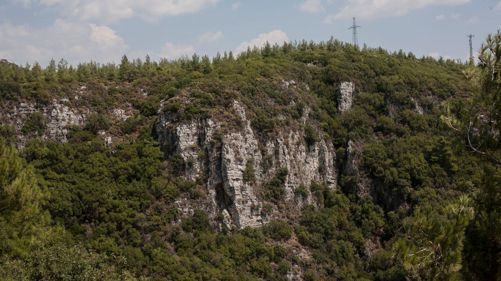 Triangular forest - Before