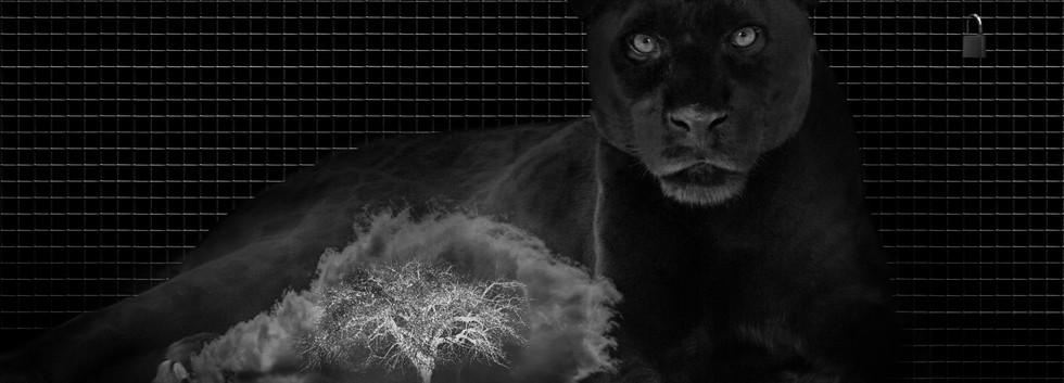 Black Leopard.jpg