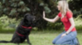 Addestrmeto cani