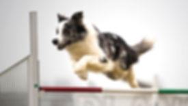 Addestramento cani milano
