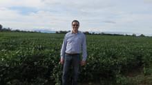 'Como bola sin manija' El dilema del pequeño productor sojero