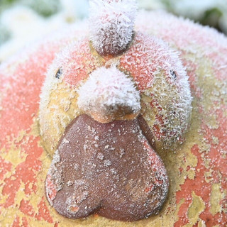 Chilly Chick!