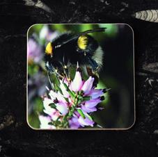 Bee on Heather Coaster
