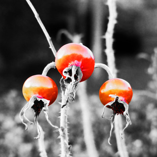 Winter Rosehips colour pop