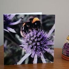 A Bee on a Sea Holly flower