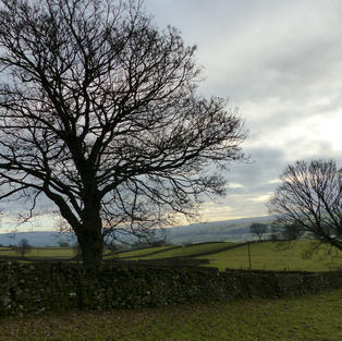 Winter Trees Yorkshire Dales