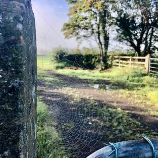 Cobweb on a farm gate