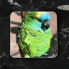 Sleepy Parrot Coaster