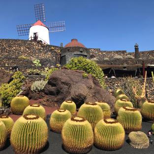 Cactus Garden Lanzarote - mother-in-law's cushions!