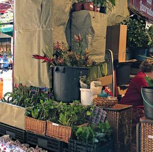 Flower stall Funchal Market