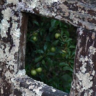 Lichen on an old gate