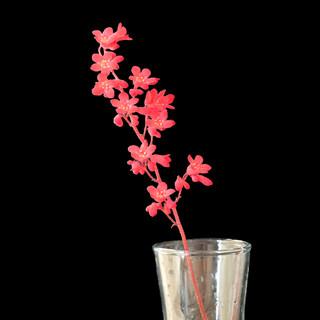 Still Life Heuchera Coral Bells