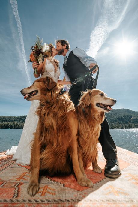 Wedding with dogs intimate wedding elopment lake tahoe CA USA