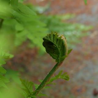 Fern frond in the rain