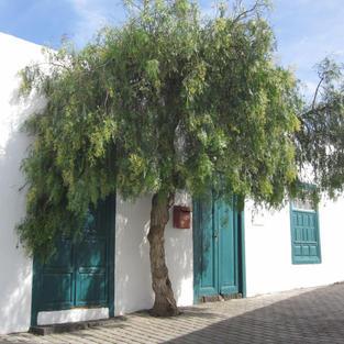 Lanzarote Street