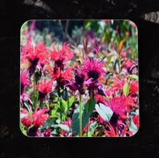 Monarda flowers Coaster
