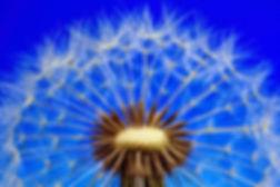 nature-3092555_1920.jpg