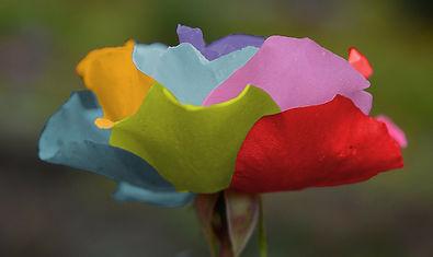 roses-212539_1920 (1).jpg