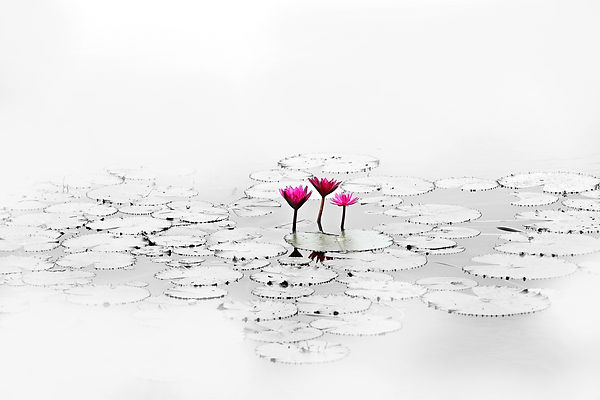 lotus-1700557_1920.jpg