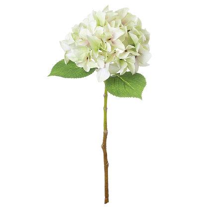 Pale Green Hydrangea Stem