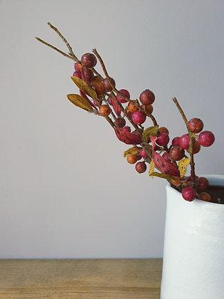 Autumn Berry Stem
