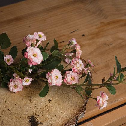 Pink Wild Meadow Rose Stem