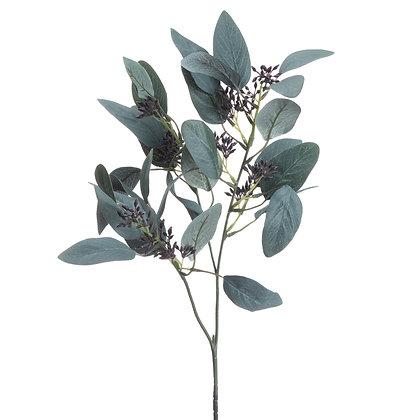 Seeded Eucalyptus Stem