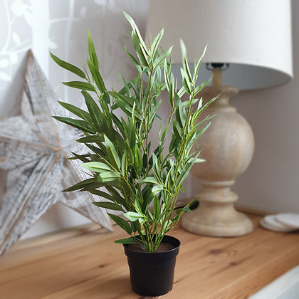 Potted Bamboo (small)