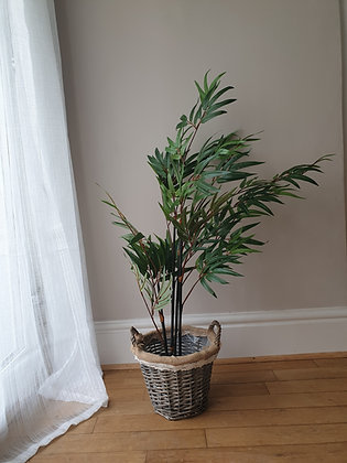 Potted Bamboo Tree