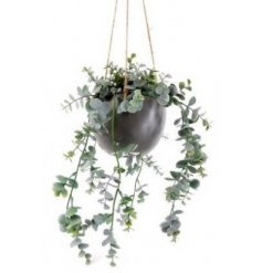 Eucalyptus Hanging Plant