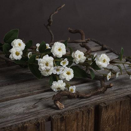 White Wild Meadow Rose Stem