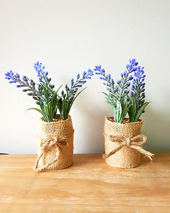 Small Potted Lavender (Set of Two)