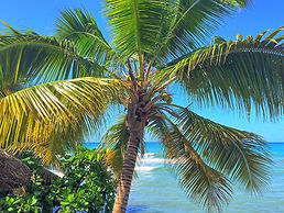 Coconut tree at Coterelle Breeze, Jacmel, Haiti