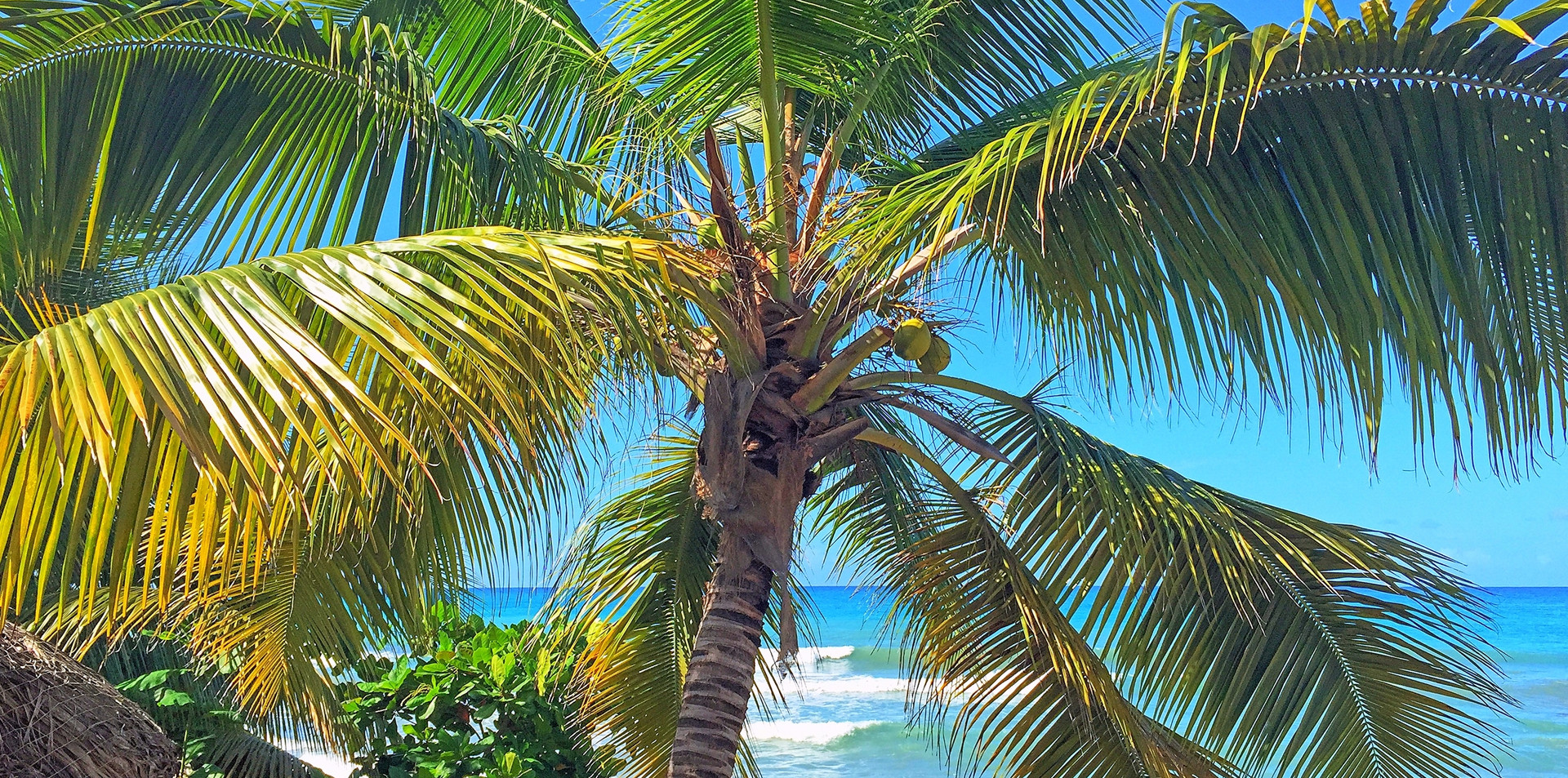 Welcome to Palm Trees and Blue Ocean