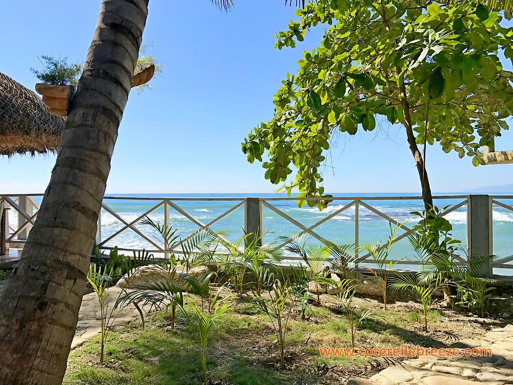Palm Tree Nursery at Coterelle Breeze