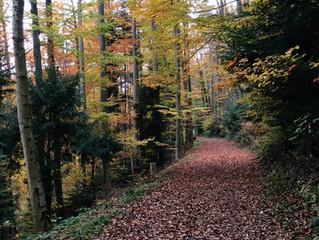 Oh dieser Herbst