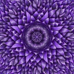 1000 Petal Lotus by Erick Stow