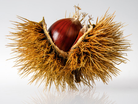 Fruto da época – A castanha