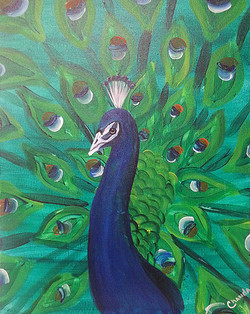 Peaceful Peacock