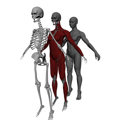 Anatomy Sculpting & Ziva VFX Real-time Mo-cap Animation(In Progress)