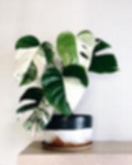 plant pic.jpg